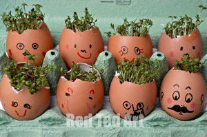 eggs-flowers